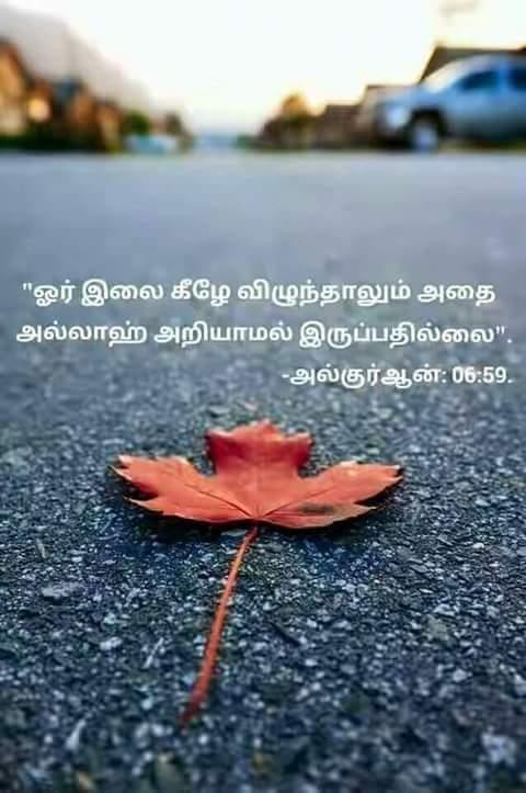 https://www.tamilislamicquotes.com/Thowheed-Irai-Nambikkai/